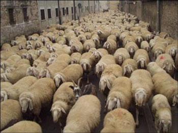 L 39 economia della transumanza - La pagina della colorazione delle pecore smarrite ...