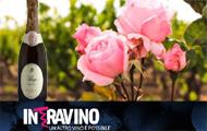 I Vini Rosé di Puglia
